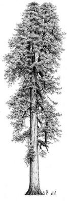 Tall Tree Foods