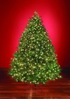Hammacher Schlemmer Introduces 2014 World's Best Christmas Trees