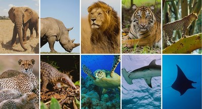 The 10 animals that will be protected under Washington Initiative 1401.