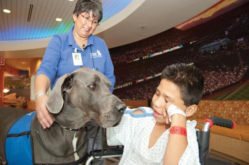 American Humane Association's Hero Dog Awards(TM) Kicks Off in Hollywood