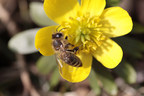Feed a Bee Initiative Receives Pledges to Plant 65 Million Flowers in First Year