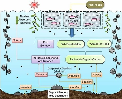 Aquaculture (PRNewsFoto/Grenada Sustainable Aquaculture)