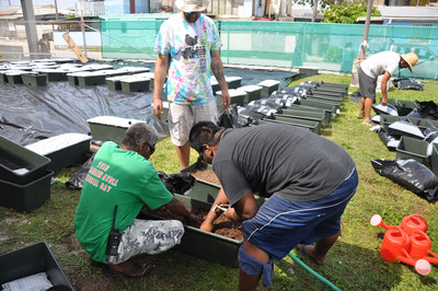 Garden boxes may prove key in reversing the diabetes epidemic on Ebeye Island, where 75% of all adults over age 50 suffer from the disease. Ebeye's sandy, rocky soil and dense population make traditional gardening virtually impossible. Non-profits Canvasback Missions and the Kwajalein Diabetes Coalition have joined forces to teach Ebeye residents to grow fresh produce in space-efficient, self-watering EarthBox garden boxes.
