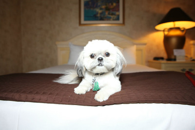 Riviera Hotel & Casino Las Vegas Launches New Pet-Friendly Program.  (PRNewsFoto/Riviera Hotel & Casino Las Vegas)