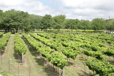 Dry Comal Creek Vineyards in New Braunfels, Texas, is one of the Texas Hill Country wineries - where five million annual visitors enjoy more than 30 unique wineries every year. Centrally located with access to a broad range of accommodations, New Braunfels offers the ideal headquarters for getting to know each winery's personality, terroir and style of winemaking. Start with Dry Comal Creek, whose pioneering work with native 'Black Spanish' grapes has resulted in award-winning wines.