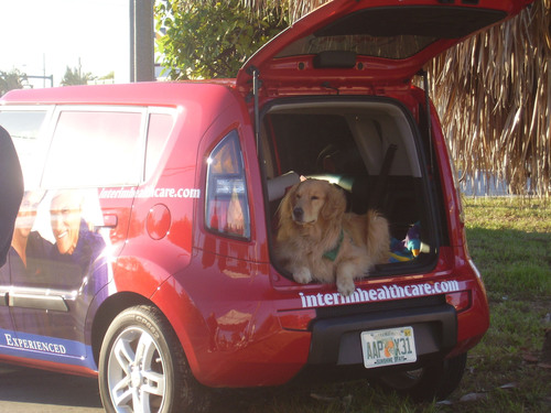 "Odie waits in his new car before heading off to brighten the lives of South Florida seniors through his work with Interim HealthCare. This therapy dog is among many being recognized during International Assistance Dog Week, August 4. Odie responds to more than 50 commands including ""hug,"" ""kiss,"" ""my lap,"" and even ""make a friend."" His visits alleviate symptoms of depression and offset memory loss and he has worked with 2,500 people so far.  (PRNewsFoto/Interim HealthCare)"