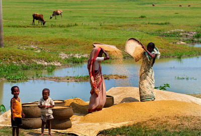 Harvest Season in Bangladesh, Mohammad Moniruzzaman.  (PRNewsFoto/CGAP)