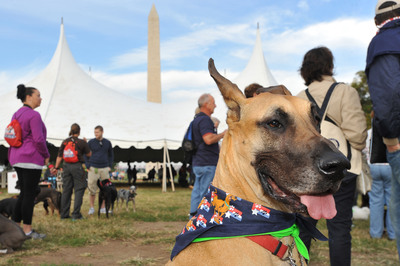 Participants and their dogs begin to gather at the National Mall on the morning of the Second Annual National Family Pack Walk on Saturday Sept. 29, 2012, in Washington. (PRNewsFoto/Larry French/Invision for Warner Bros. Consumer Products/AP Images)