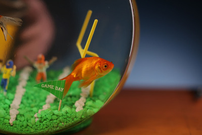 "Nat Geo WILD Reveals The Lead Role In Upcoming Four-hour Reality Event ""Fish Bowl"".  (PRNewsFoto/Nat Geo WILD)"