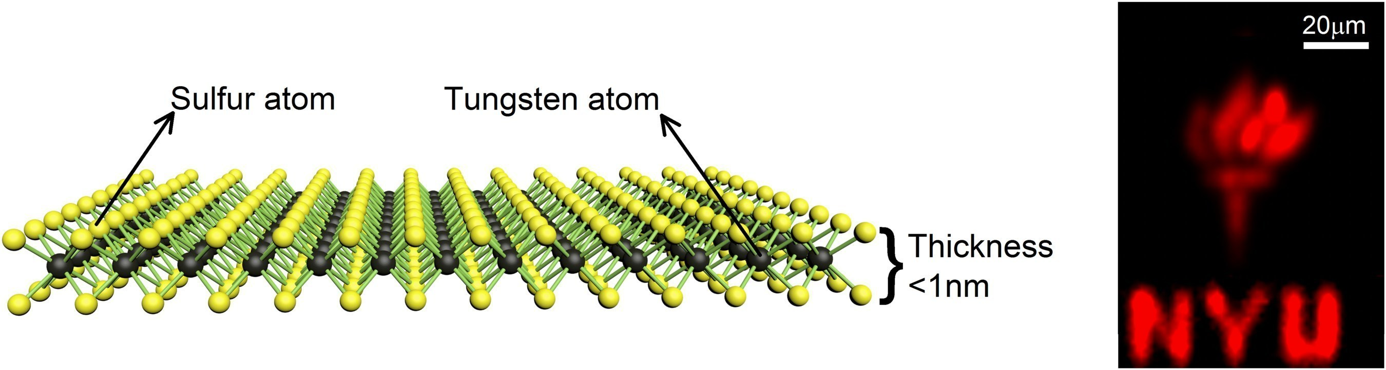 At just one atom thick, tungsten disulfide allows energy to switch off and on -- important for nano-scale electronic transistors -- but it also absorbs and emits light, which could find applications in optoelectronics, sensing, and flexible electronics. The NYU logo shows the monolayer material emitting light. Researchers at NYU Tandon reported success in growing the promising monolayer material.