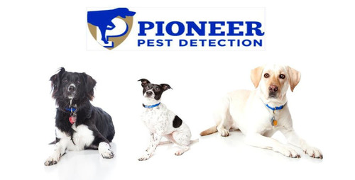 Pioneer Pest Detection: A Team of Noses Sniffs Out Bedbugs