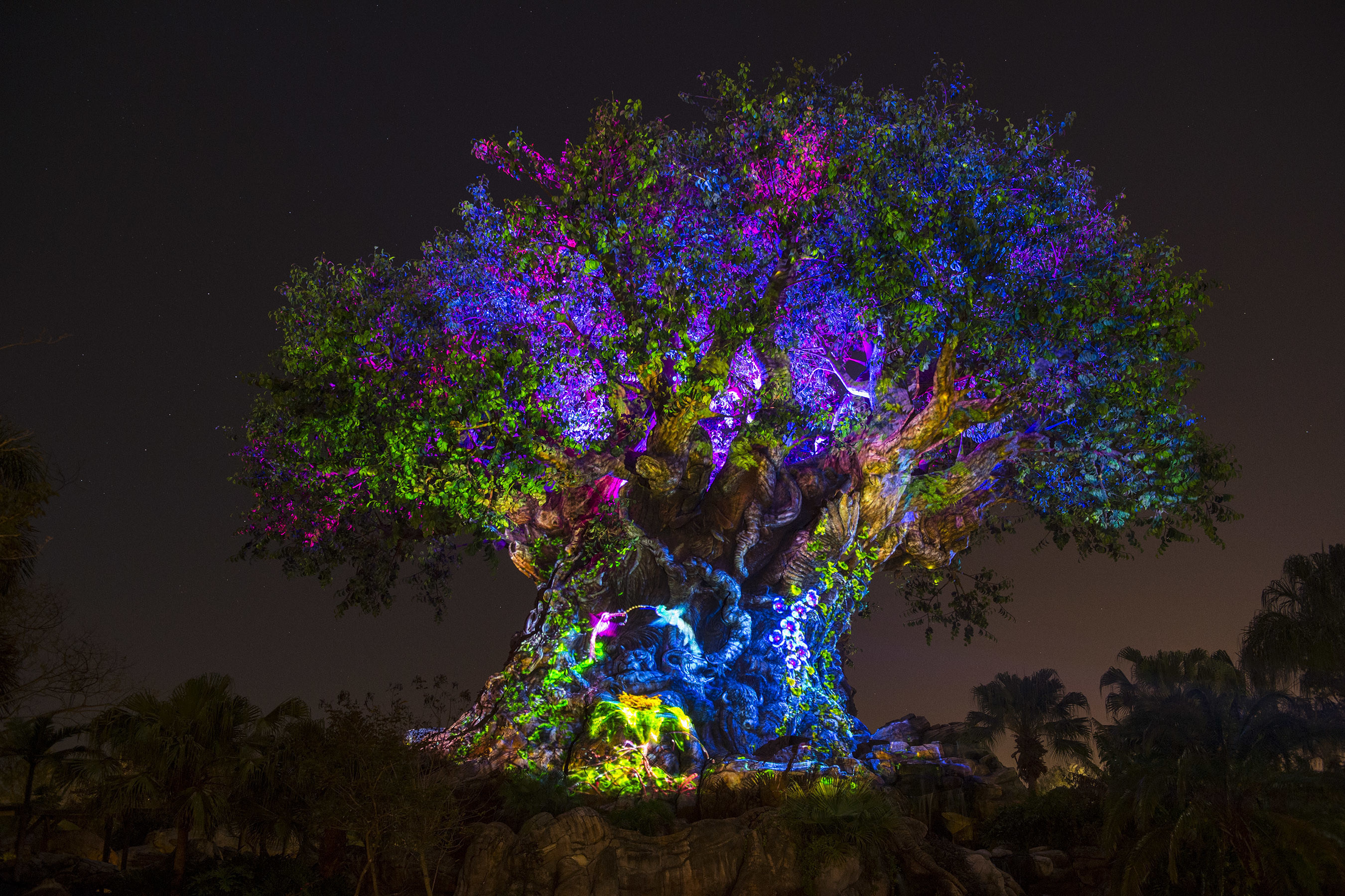 """Disney's Animal Kingdom's iconic Tree of Life will undergo extraordinary """"awakenings"""" throughout each evening as the animal spirits are brought to life by magical fireflies that reveal colorful stories of wonder and enchantment. Projections of nature scenes take on a magical quality as they appear to dramatically emanate from within the Tree of Life. (David Roark, photographer)"""