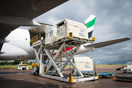 """Horses bound for the Rio 2016 Olympic games are loaded onto an Emirates SkyCargo Being 777-F at London Stansted Airport. On the flight were 34 horses from 10 of the nations competing in Equestrian at Rio 2016"""" (FEI/Jon Stroud media) (PRNewsFoto/FEI)"""