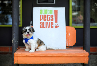 Austin Pets Alive! (Photo by Seth Casteel)