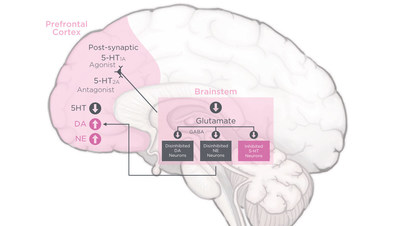 Flibanserin helps restore prefrontal cortex control over the brain's motivation/reward pathways that enable sexual desire. This is thought to be accomplished by the rebalancing of neurotransmitters that influence sexual desire. Flibanserin increases dopamine, or DA, and norepinephrine, or NE, (both responsible for sexual excitement) while transiently decreasing serotonin, or 5-HT (responsible for sexual satiety/inhibition).
