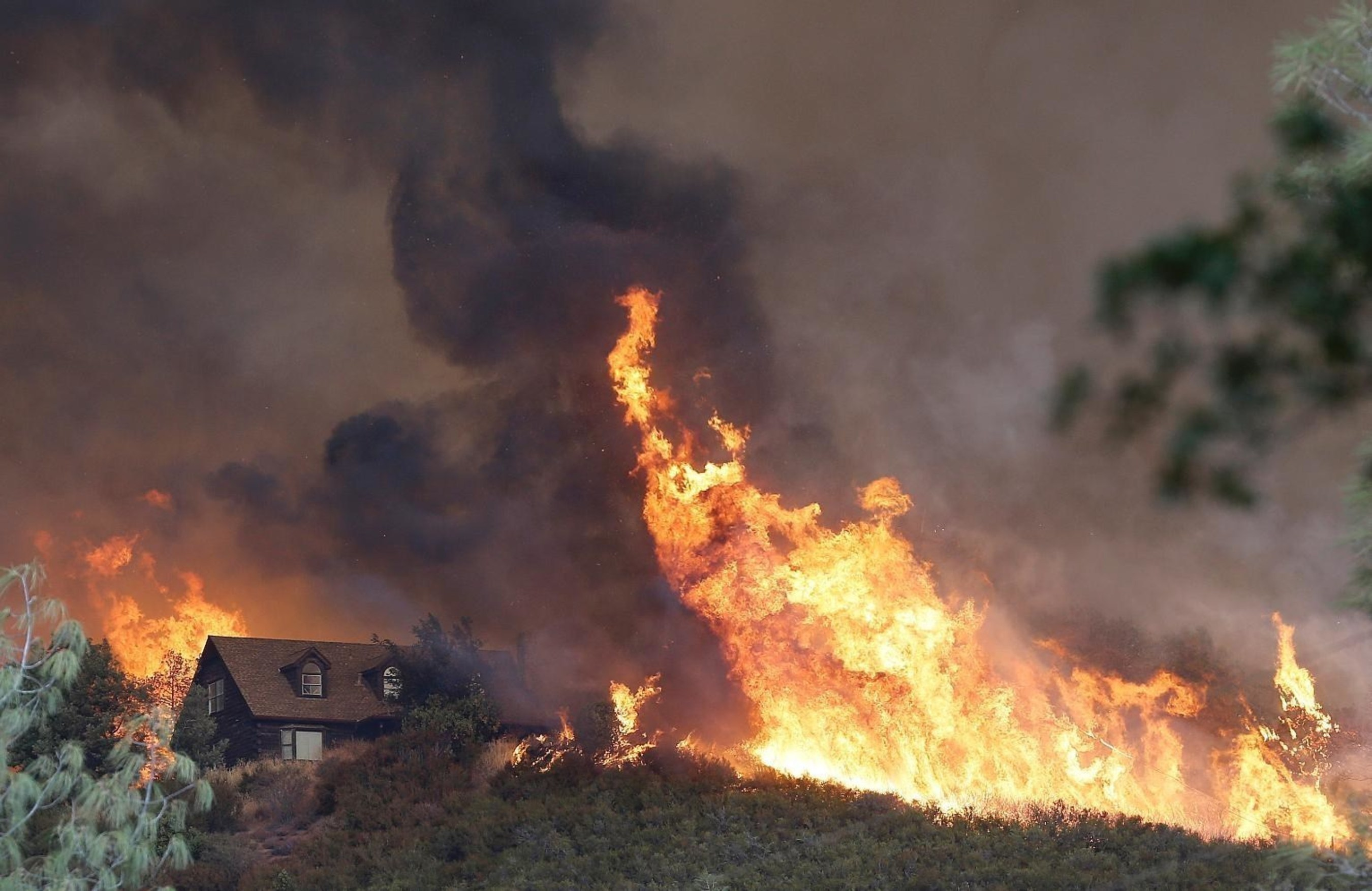 Trees For Sale Online Nursery: West Coast Drought, Wildfires Threaten Tree Population across Seven