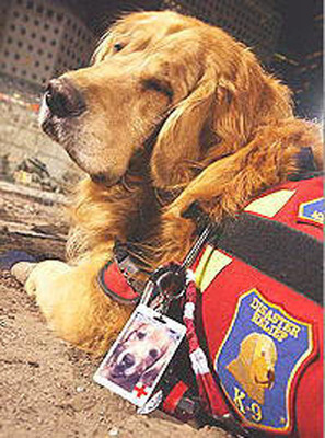 "K-9 Disaster Relief ""Nikie"" - Ground Zero, 2001.  (PRNewsFoto/K-9 Disaster Relief)"