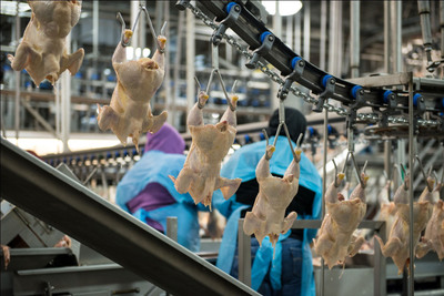 Workers inspect chicken for safety.  (PRNewsFoto/National Chicken Council)