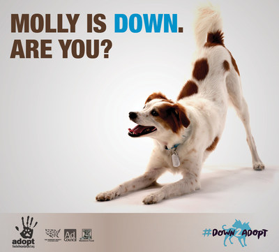 MTV2 is #Down2Adopt shelter pets in new PSA partnership for Adopt-a-Dog Month