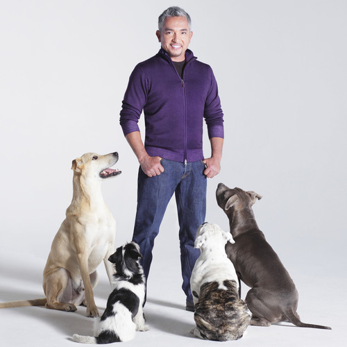 The Animal League Honors Dog Expert Cesar Millan @ DogCatemy Dinner in NYC, 12-8.  (PRNewsFoto/North Shore ...
