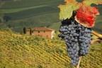 Chianti Vineyard in Tuscany, Italy