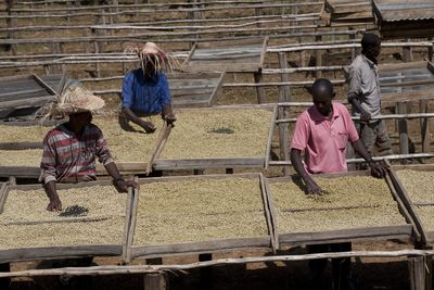 Nespresso expands the AAA Sustainable Quality(TM) Program in Ethiopia, Kenya and South Sudan