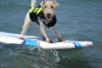 Helen Woodward Animal Center and Blue Buffalo Celebrate 10 Years of Surf Spectacles by BONE-afied Athletes as the Surf Dog Surf-A-Thon Marks a Decade of San Diego's Most Unique Sport!