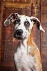 8 Essential Doggie Summer Travel Tips
