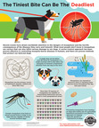 """A mosquito bite is more than just an ouch! That bite transmits diseases - possibly Zika to people and heartworms to our beloved pets. There are ways to reduce the mosquito population around your home, prevent bites and protect the whole family. And, a new study suggests a """"Double Defense"""" protocol may protect your pet best. Learn more at www.fightheartwormnow.com"""