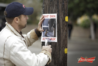 "Budweiser's ""Lost Dog"" Super Bowl XLIX spot will feature the world-famous Budweiser Clydesdales and their favorite puppy companion. In the ad, the Budweiser Clydesdales will tell an emotional story and help a puppy who has lost his way learn the true meaning of friendship."