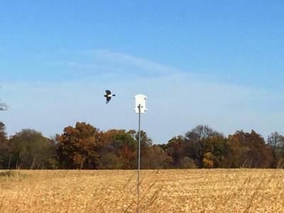 New bluebird house easily mounts to metal pole