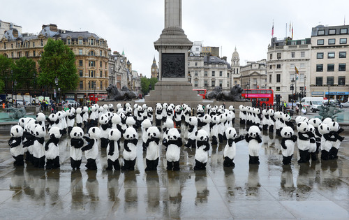 108 costumed pandas performing a tai-chi inspired dance in London for the launch of Chengdu Panda Awareness ...