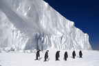 Emperor penguins in Antarctica. (Credit: John B Weller, Courtesy of The Pew Charitable Trusts)