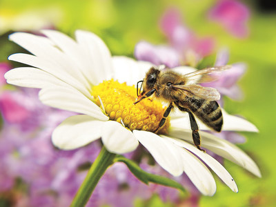 The National Honey Board (NHB) is currently requesting research pre-proposals for projects focused on honey bee colony production.