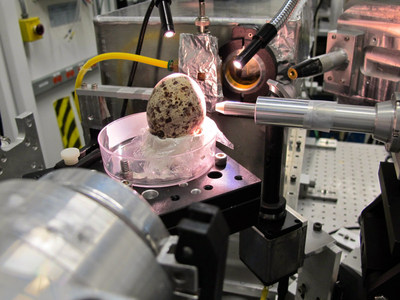 An osprey egg being tested by Monica Tischler, Ph.D., professor of Biology at Benedictine University, during research conducted at Argonne National Laboratory.