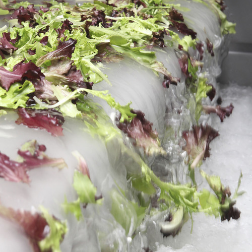Fresh Rinse(TM) in action -- innovative new produce wash from Fresh Express thoroughly washes fresh lettuce.  ...