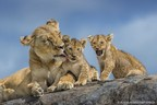 Epson Sponsors Nature's Best Photography Awards as Printer and Paper Partner for Fifth Consecutive Year