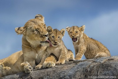 Epson sponsors the Nature's Best Photography Awards for the fifth consecutive year. All award winning photographs will be displayed at the Smithsonian National Museum of Natural History in Washington, D.C. starting October 19. Photo credit: Russ Burden/NBP Africa