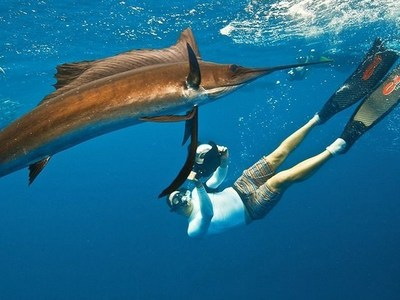 Snorkel with Sailfish