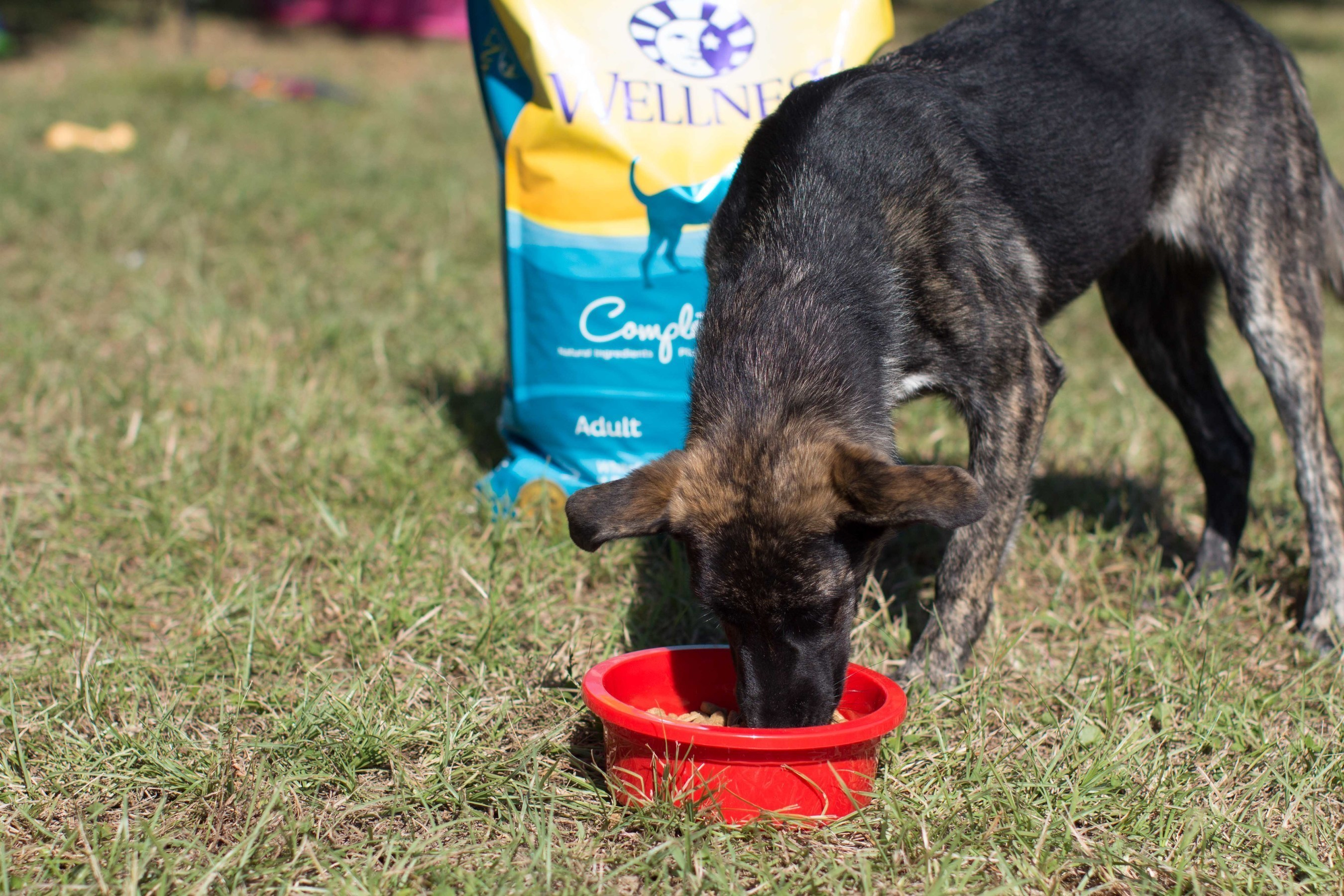 Rescued dog enjoying Wellness Natural Pet Food from 25 ton donation to CAABR.