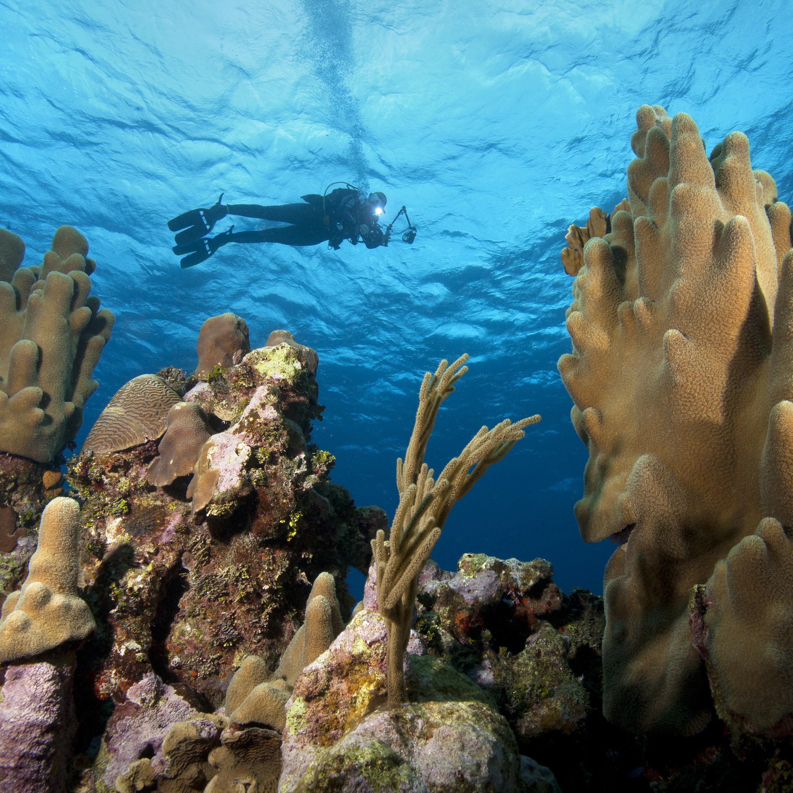 Brac Reef Beach Resort to Undergo Extensive Transformation