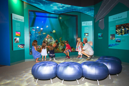 Guests enjoy the patch reef aquarium inside the Dalton Discovery Center at the newly renovated Conservancy of ...