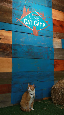 Purina ONE Cat Camp Now Open for Campers in New York.