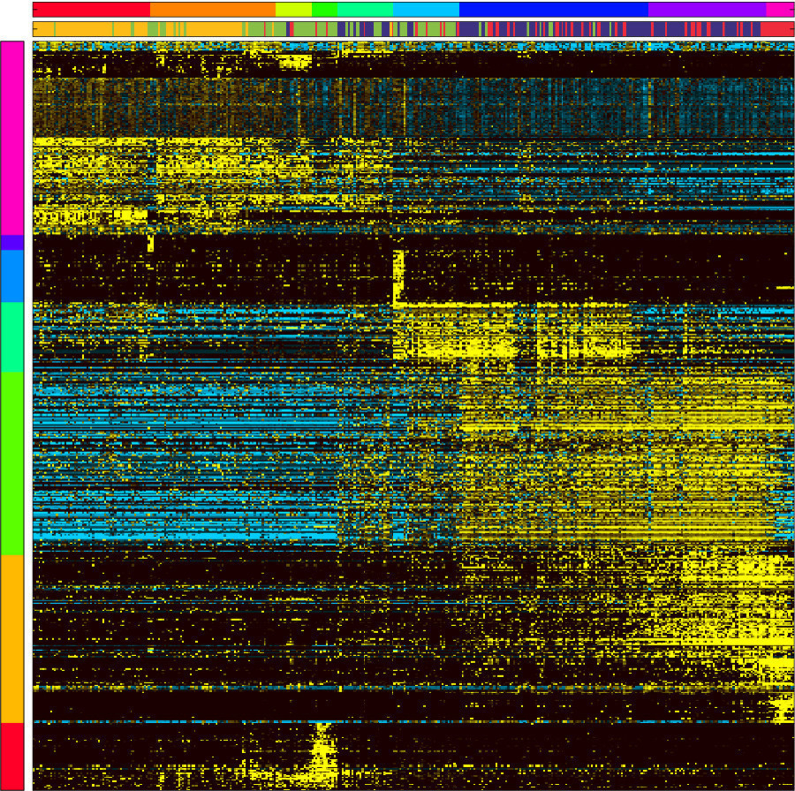 Order from Chaos - With a jumble of colors resembling abstract art, this array shows the expression of genes (horizontal rows) that are associated with different types of bone marrow progenitor cells (vertical columns). Part of a study published Aug. 31 by Nature, the image was produced from a software program called Iterative Clustering and Guide-Gene Selection, developed by researchers at Cincinnati Children's. It gives scientists an unbiased way to identify developing cells in various intermediate states and discover new cellular intermediates. Yellow indicates highly expressed genes in particular cells, while blue indicates low or no expression. The study addresses a fundamental question of developmental biology - the nature of intermediate cell states and the regulatory gene networks that cause cell-type specification.