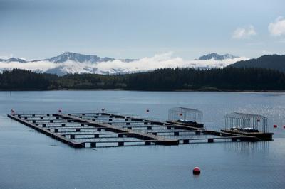 Prince William Sound Aquaculture Corporation, Cordova, Alaska.  (PRNewsFoto/Prince William Sound Aquaculture Corporation, Brian Adams)