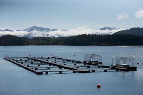 Prince William Sound Aquaculture Corporation, Cordova, Alaska.  (PRNewsFoto/Prince William Sound Aquaculture ...