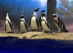 African Penguins Move To Miami Seaquarium