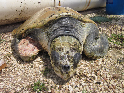 Newest Documents From Cayman Tourist Attraction Reveal Knowledge of Animal Mistreatment, According to World Society for the Protection of Animals