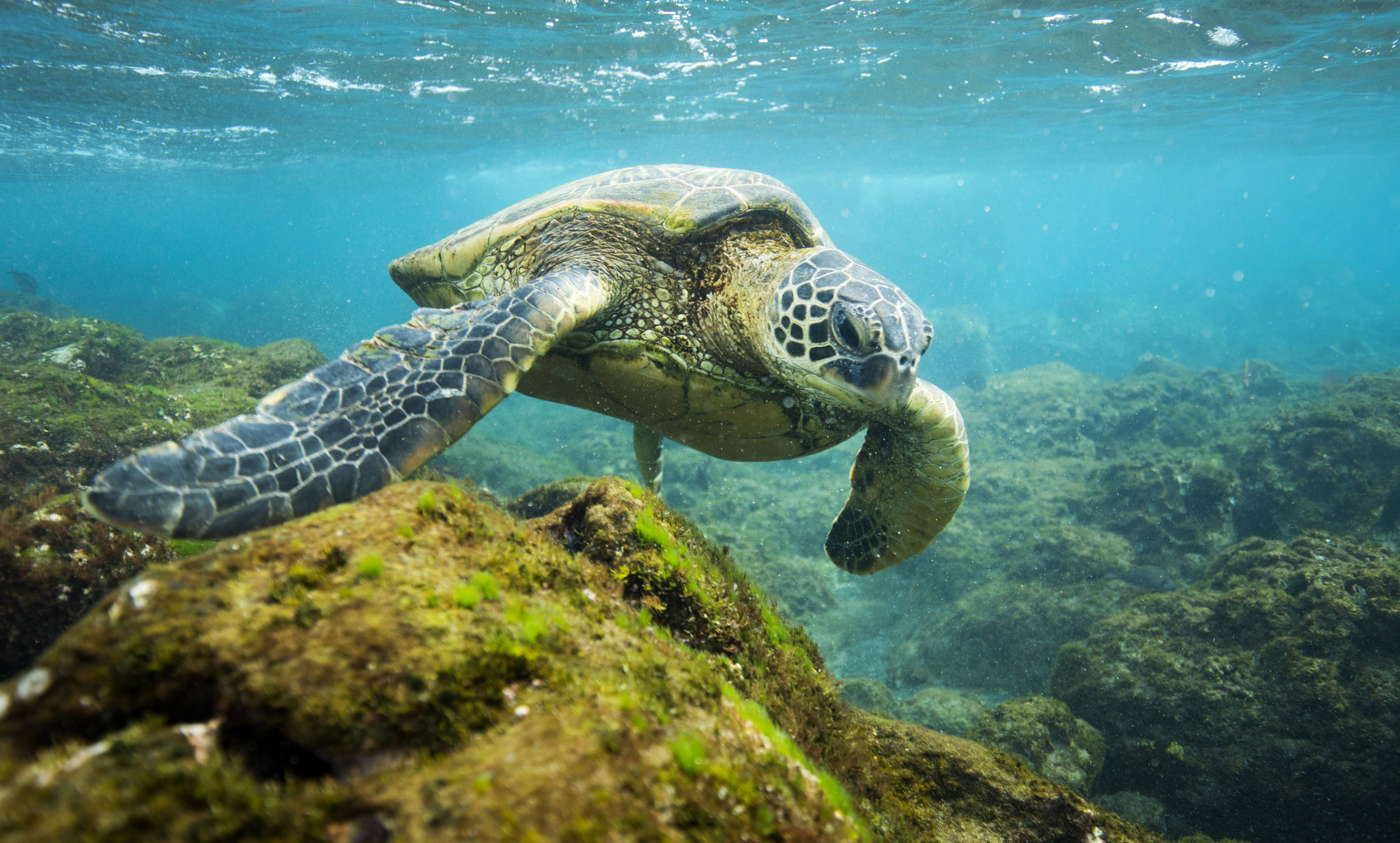 Sea turtle, Lee Gillenwater, The Pew Charitable Trusts