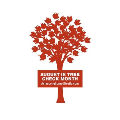 August is Tree Check Month. Take 10 minutes during the month of August to look for and report any signs of the Asian Longhorned Beetle.